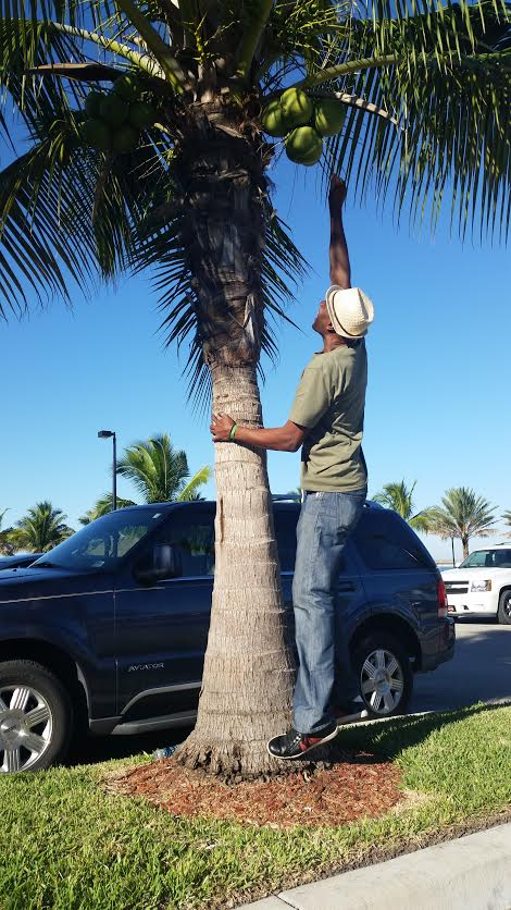 Real Estate Broker Mr. Phillip enjoying the lifestyle of Florida picking coconuts off the tree.