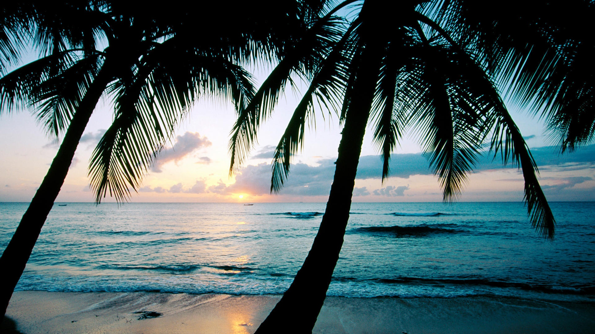 Ocean-Sunset-Palm-Trees